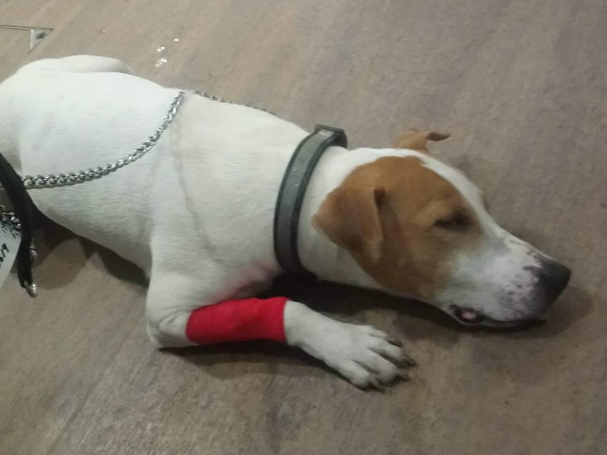 Dog Accidentally Swallows Nintendo Tapes